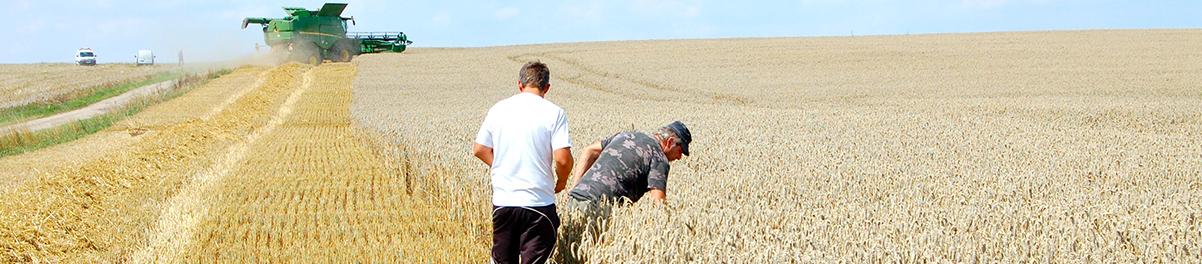 Céréales : un métier de la Coopérative Agricole Lorraine
