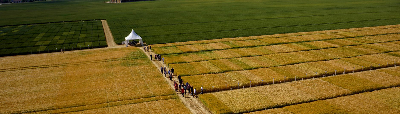 La Coopérative Agricole Lorraine - damier vert