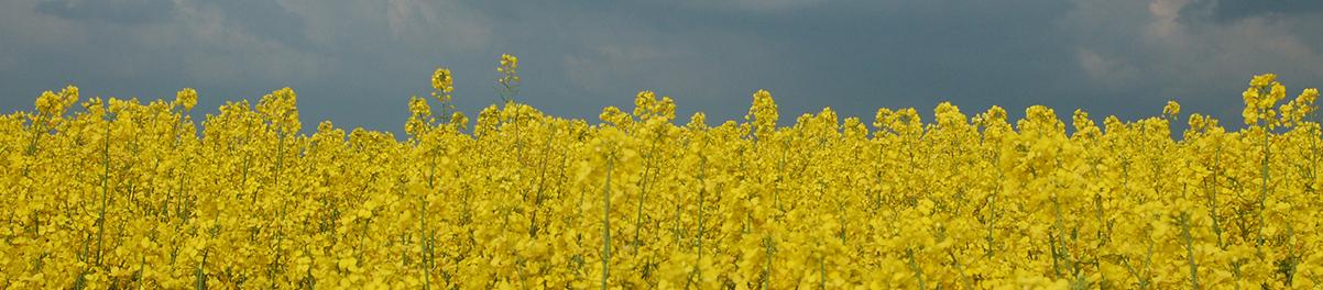 Coopérative Agricole Lorraine : service approvisionnement