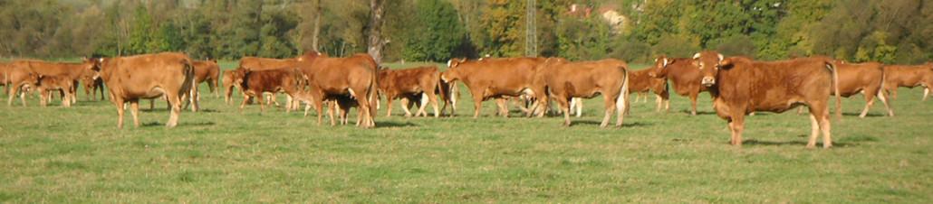 L'élevage, un métier de la Coopérative Agricole Lorraine